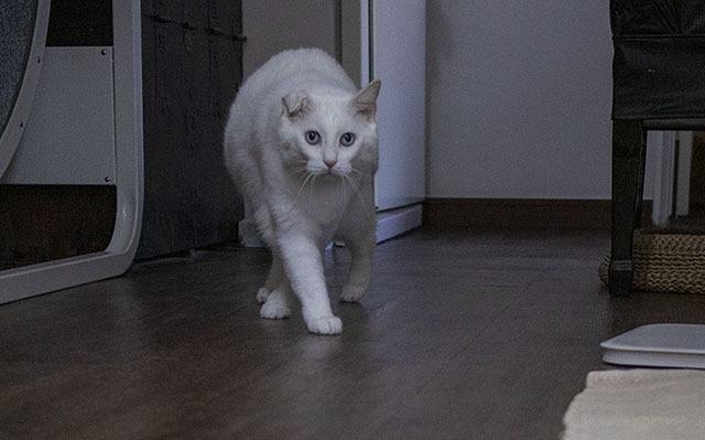 다리를 꼬고 느릿느릿 기지개를 키며 움직이는 고양이