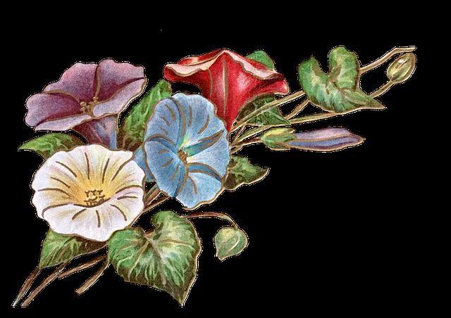 나팔꽃그림 레알