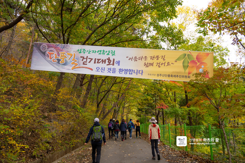 보령 성주산 자연휴양림 단풍길 걷기대회