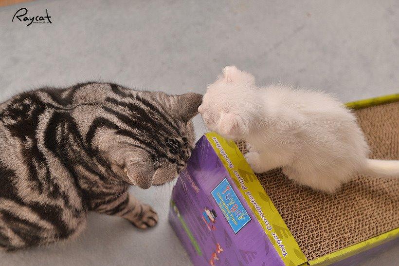 스크래치판 위의 두 고양이