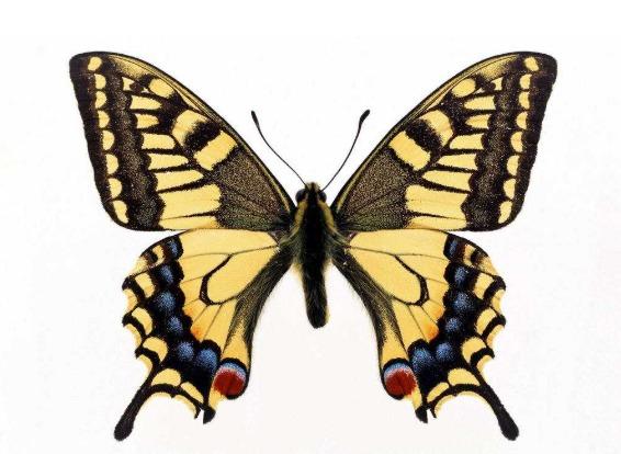 나비효과 뜻
