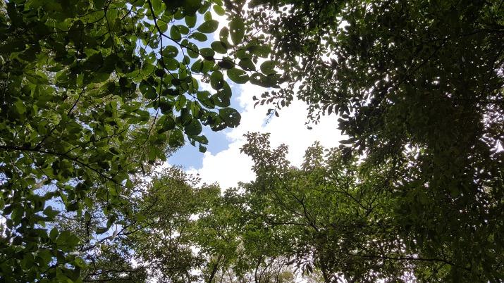청명한 9월 가을 하늘을 덮은 초록 녹음