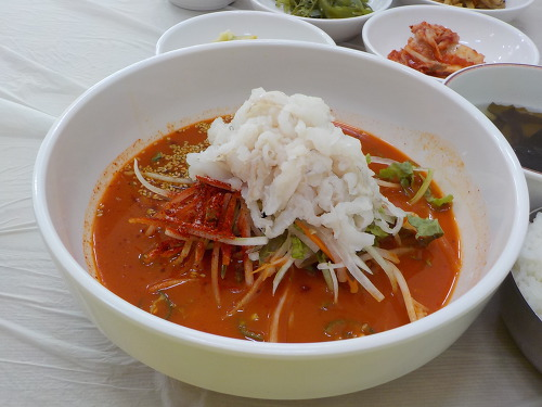속초 수요미식회 오징어물회맛집 완도회식당