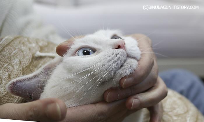 약을 먹고 두 눈을 부릅뜨고 삼키는 고양이