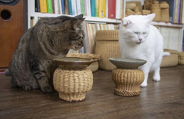 눈까지 질끈 감고 맛있게 드시는 고양이 형제