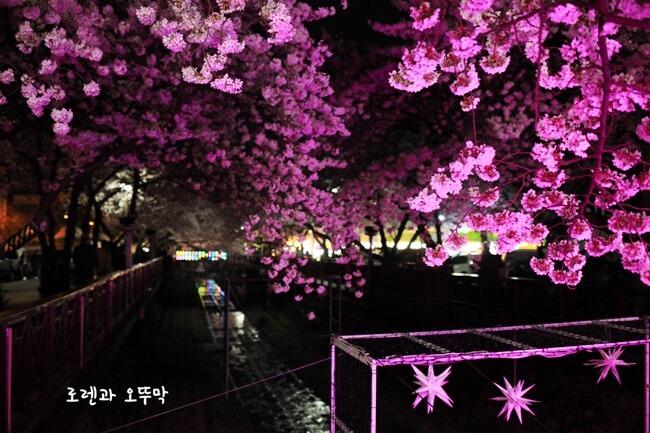 진해 벚꽃시즌~여좌천의 낮과 밤(2019년 3월말)17