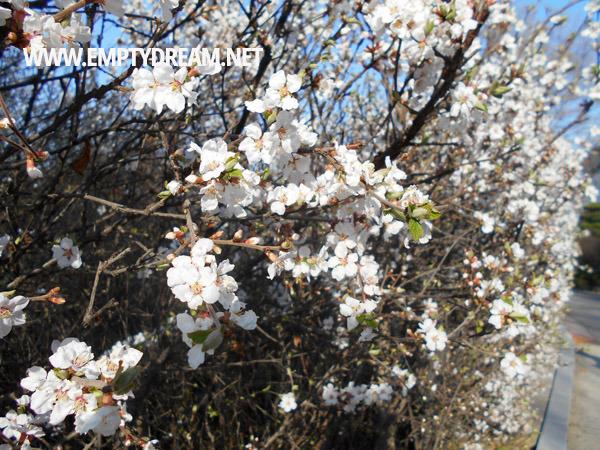 서울 어린이대공원 벚꽃과 식물원, 소소한 한나절