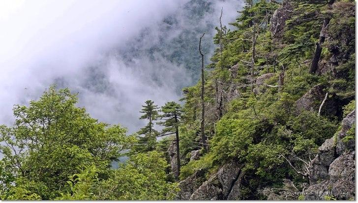 아름다운 지리산 구상나무 사진전