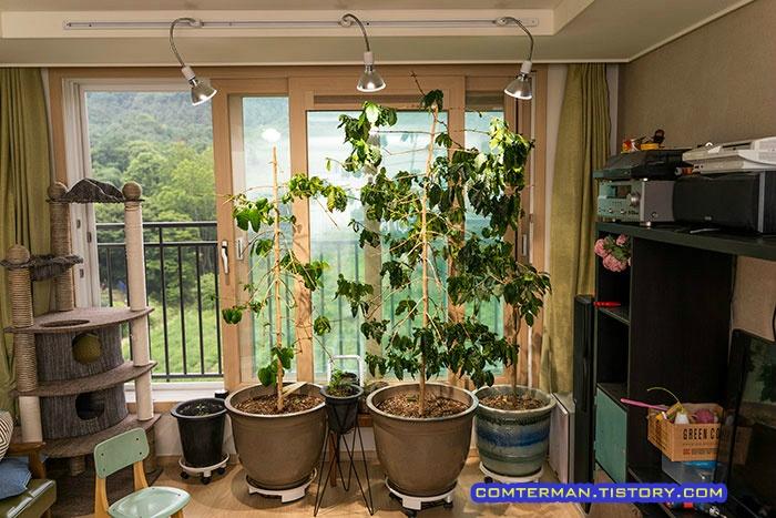 커피나무 식물 LED 조명