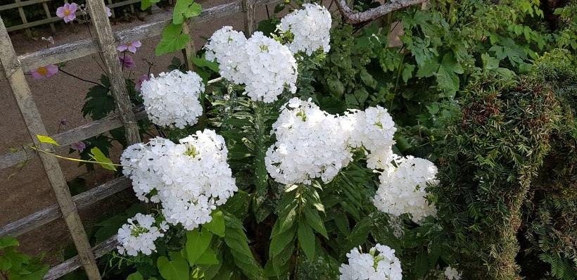 베르사유 궁전 정원 - 꽃