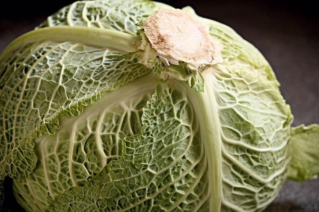 살림 노하우~! 유통기한 늘려주는 채소 보관 꿀팁! [살림정보 / 생활정보] 양배추 보관법