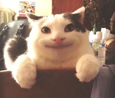 예의바른 고양이 1