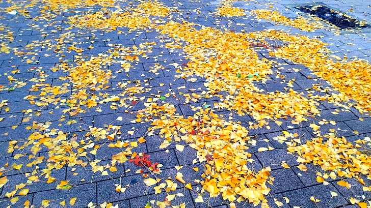은앵잎 길