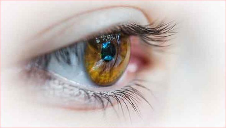 블루베리의 효능과 눈건강