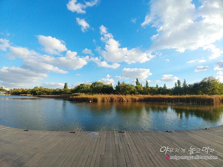 상암 월드컵 공원 단풍 가을나들이