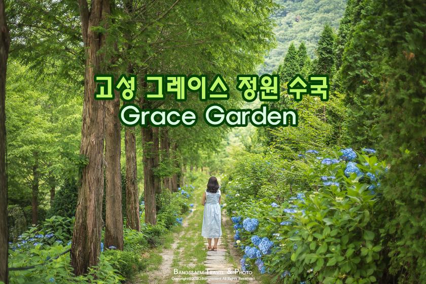 깊은 숲속 꽃들로 가득한 예쁜 정원 하나, 고성 그레이스 정원 수국