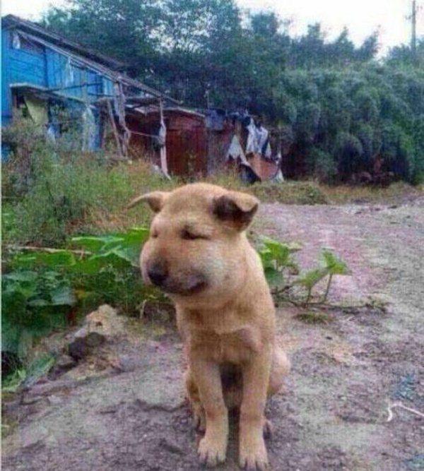 말벌집 건드린 개