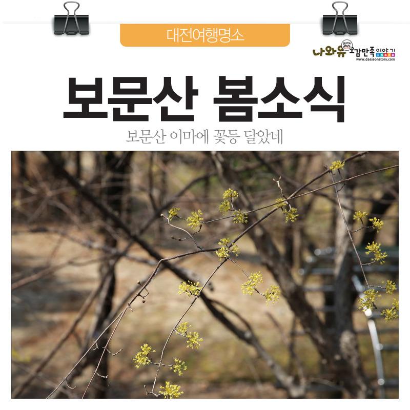 대전여행보문산 이마에 꽃등 달았네!