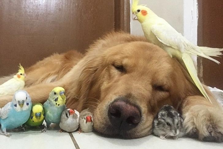 종을 초월한 동물들의 사랑과 우정