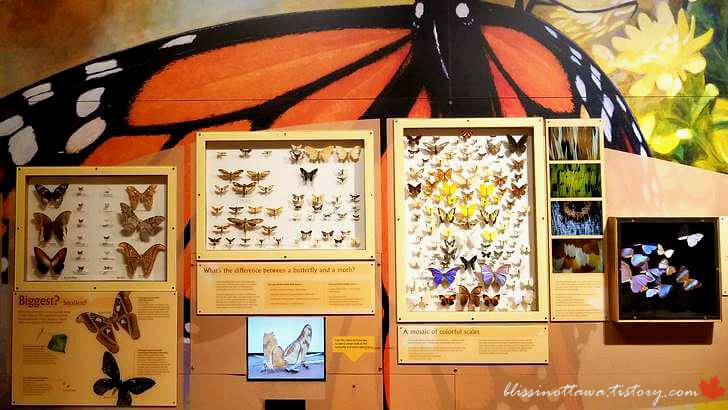 나비 특징입니다