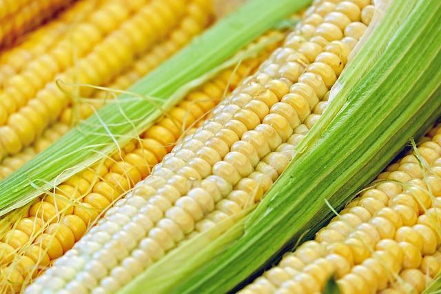 부종, 잇몸질환, 전립선건강에 좋은 옥수수 효능 [옥수수수염차 효능 ㅣ 옥수수수염차 만들기] 옥수수대효능 ㅣ 옥수수씨눈 효능 ㅣ