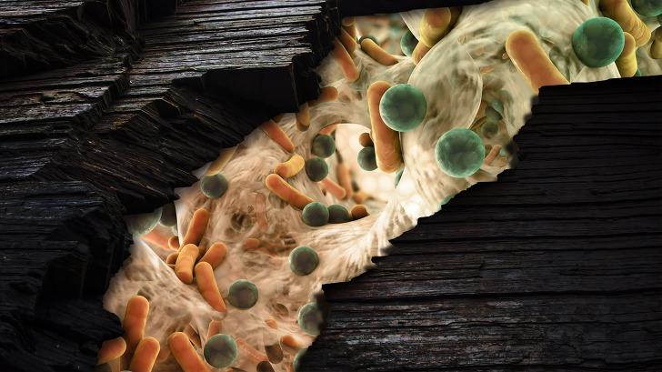 미생물 사진