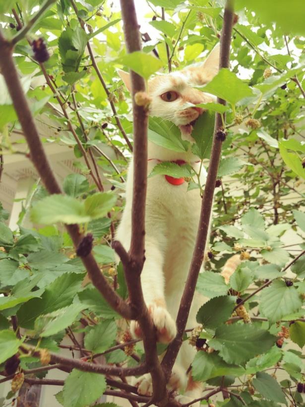 고양이의 나무 타기