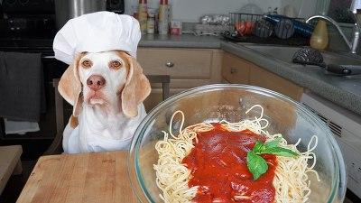 메이모 스파게티 요리