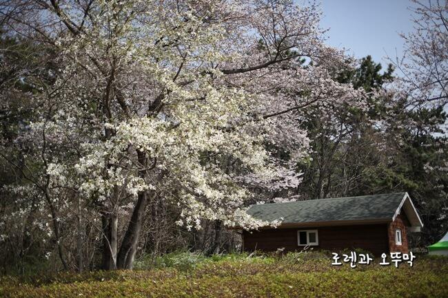 4월 진해 내수면 환경생태공원 벚꽃 산책14
