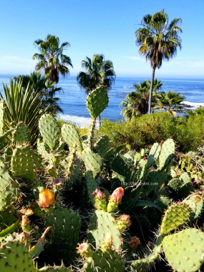 절벽의 멋진 뷰를 자랑하는 라구나 비치 [LA 여행/ 캘리포니아 여행/ 엘에이 바닷가/ Laguna Beach]4
