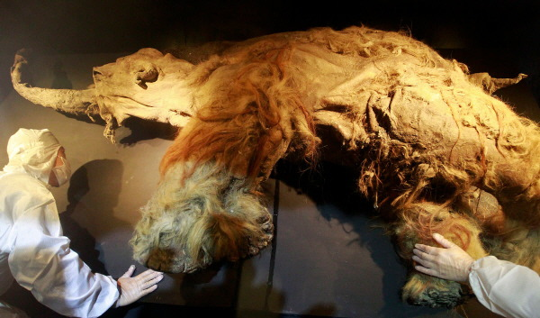5. mammoth frozen in siberia