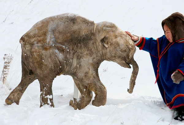 6. mammoth frozen in siberia