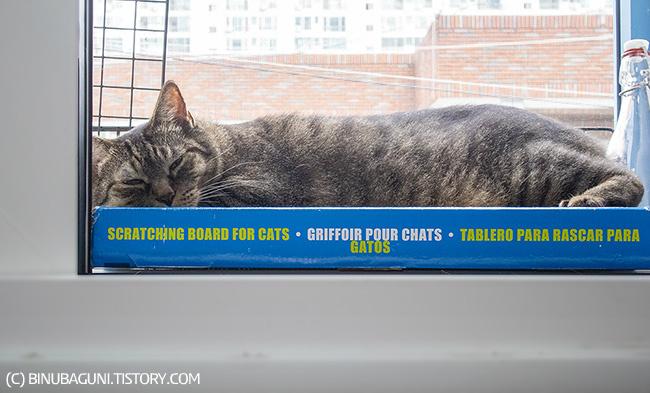 창틀에 드러누운 불만 많은 고양이