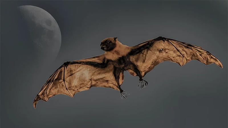 박쥐는 날기 위해 체온이 올라가고 면역력이 높아진다