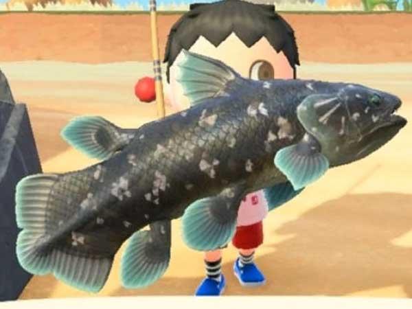 수집 - 물고기 타이틀 이미지