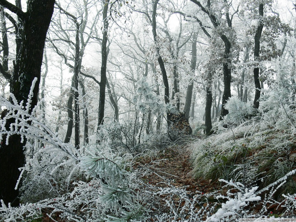 Freezed Forest wallpaper