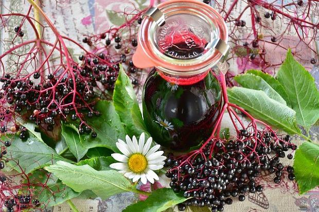 콜라겐 풍부한 식품(음식) 13가지 [콜라겐 효능 효과] 엘더베리 효능