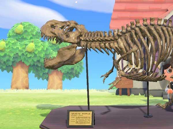 수집 - 화석 타이틀 이미지