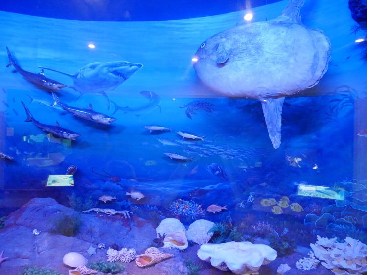 진해해양공원 해양생물테마파크