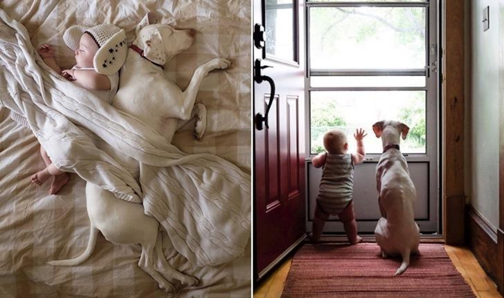 주인에게 학대당한 개와 사랑스러운 아기의 감동적인 우정