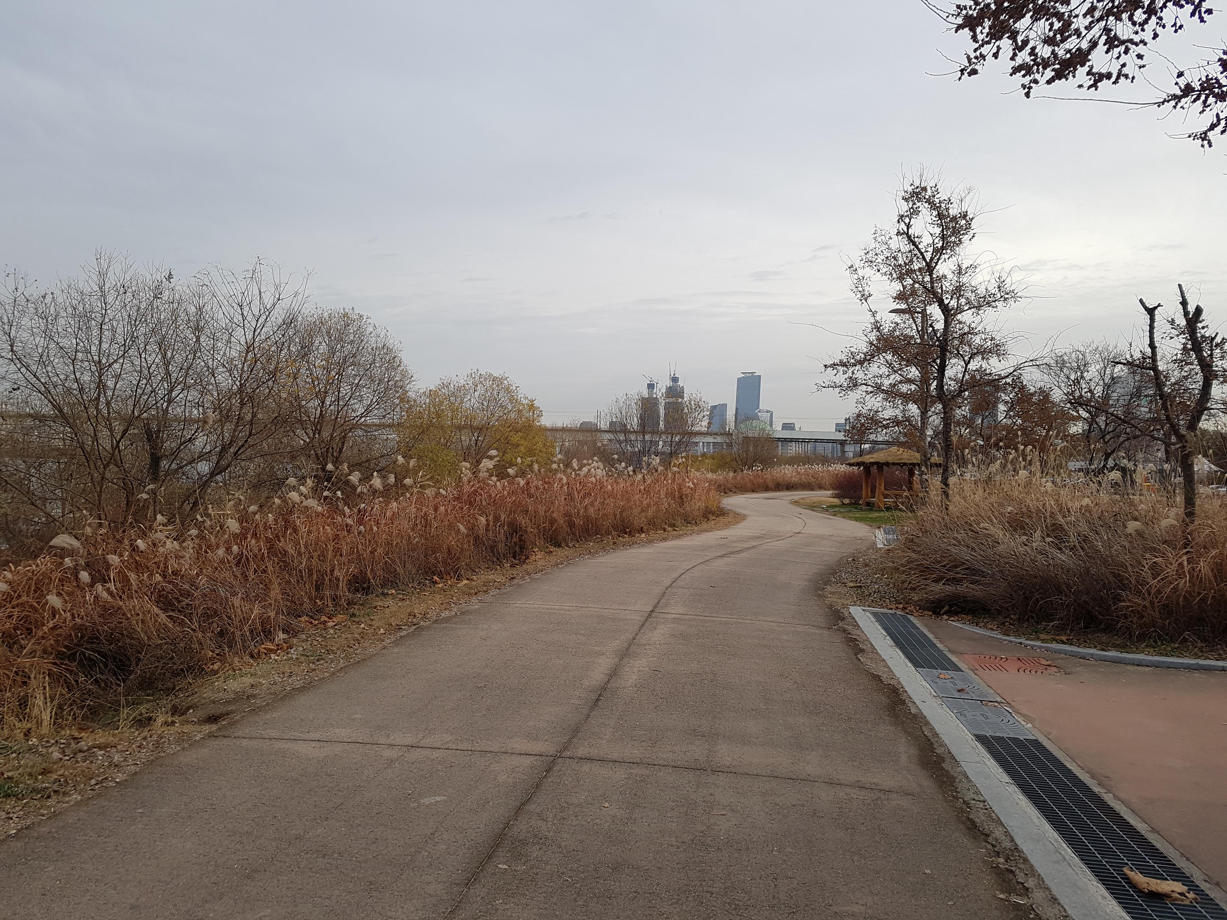 12월초 한강공원 : 당신이 사는 삶을 사랑하라. 당신이 사랑하는 삶을 살아라.