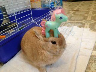 애완 토끼