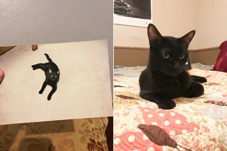실종된 지 5년 만에 다시 돌아온 블랙 팬서 고양이
