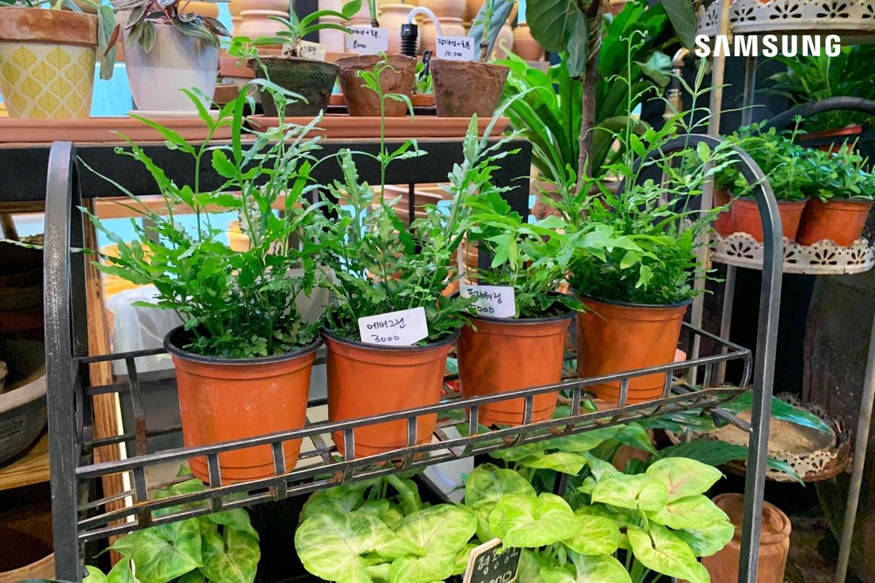 지앤아트스페이스 식물