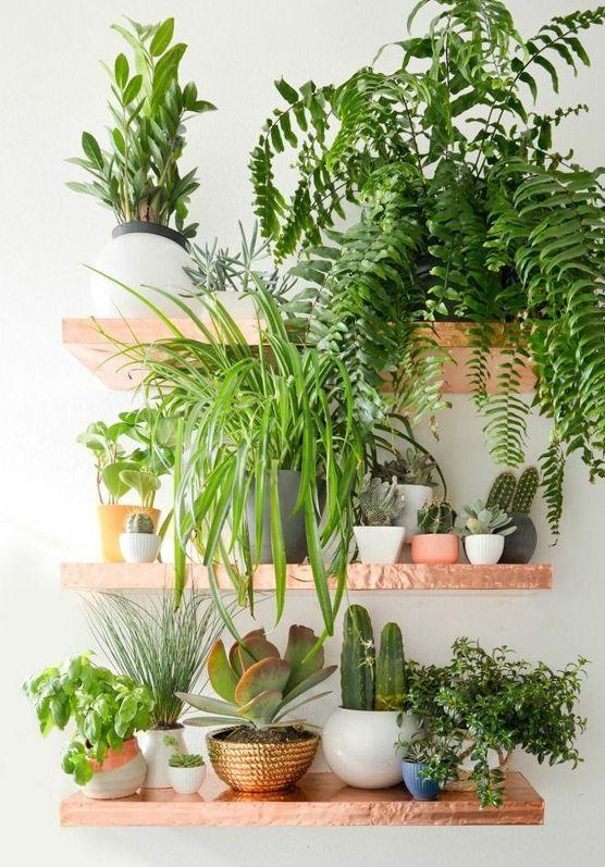 식물 필요 빛양과 위치에 따른 조도, 일조량에 따른 식물 성장, 실내공기정화식물 총정리