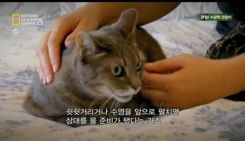 고양이키우기7