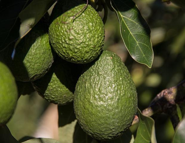 콜라겐 풍부한 식품(음식) 13가지 [콜라겐 효능 효과] 아보카도 효능