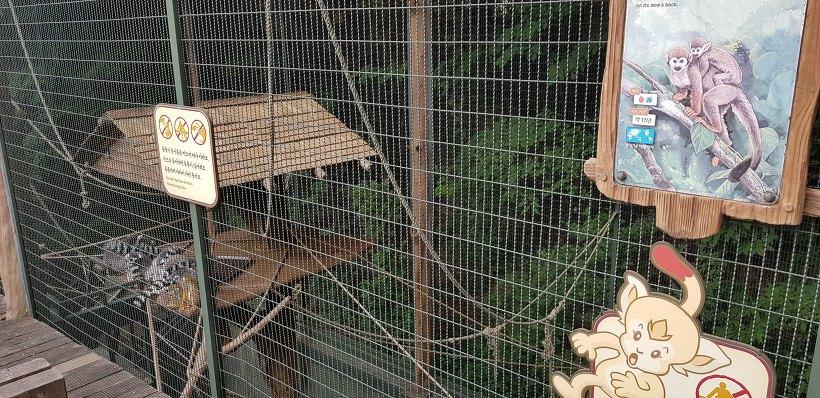 에버랜드 알락꼬리 여우원숭이