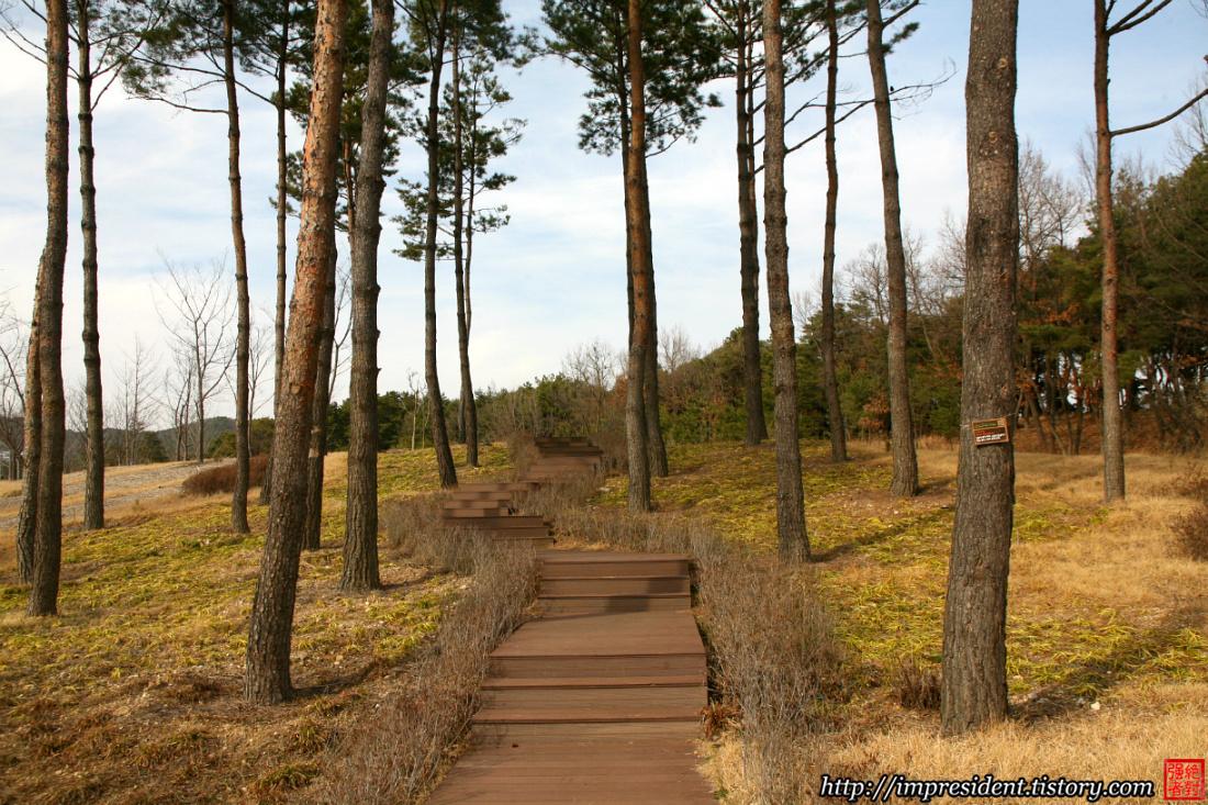 천년숲15