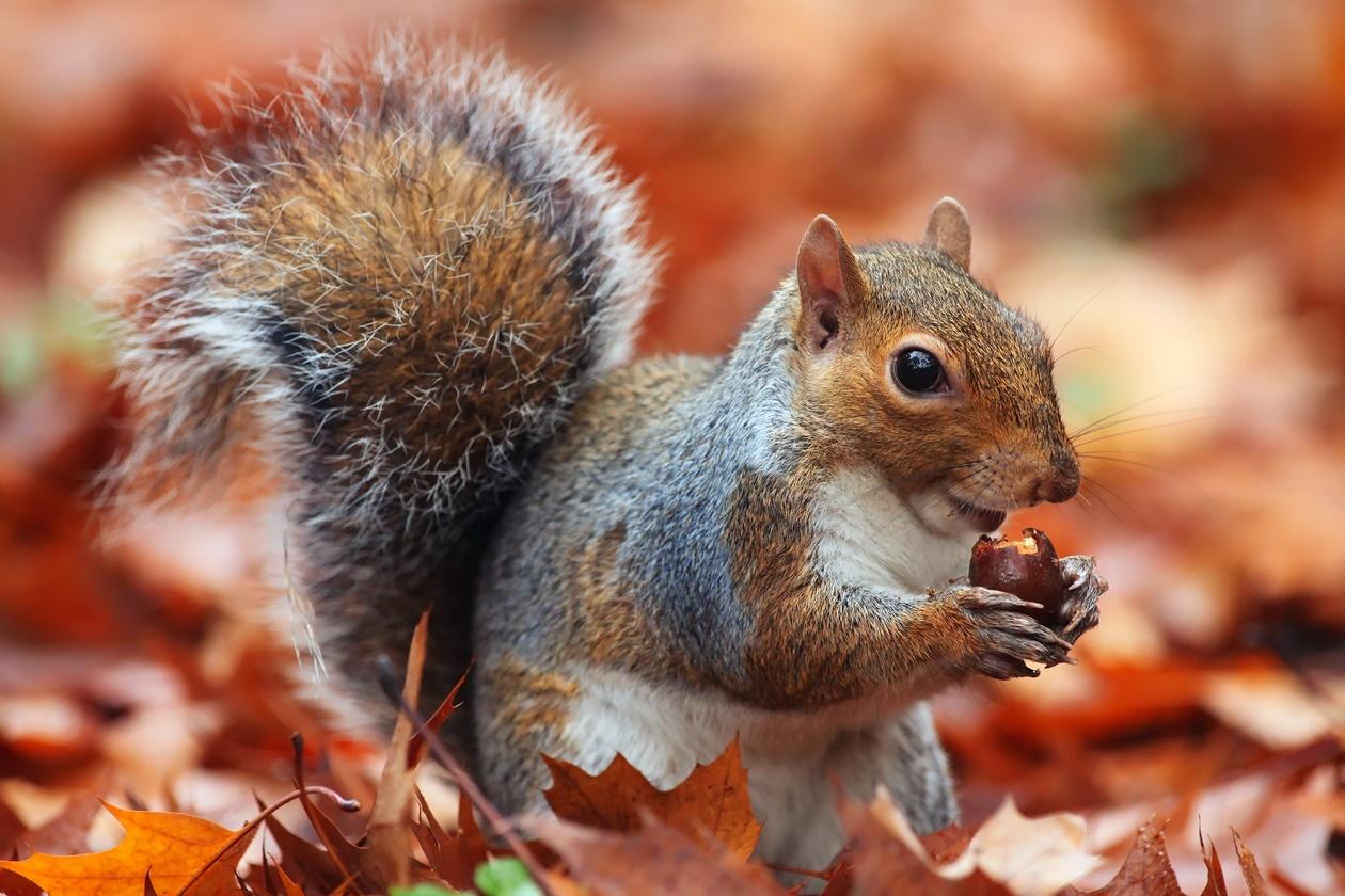 도토리를 먹고있는 다람쥐
